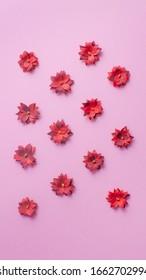 Papierblumen kalanchoe auf rosafarbenem Hintergrund. Vertikaler Hintergrund für Geschichten