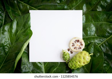 Paper mockup white card on a Noni leaves or Morinda Citrifolia background and noni slice with seed of the noni. Creative layout with nature concept. with copy space for text. Top view.