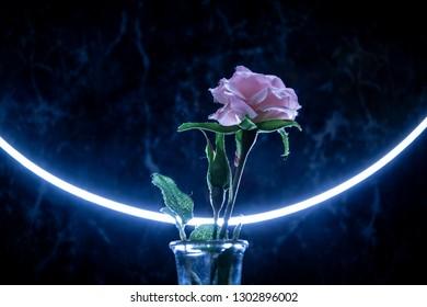 Paper rose. Art-photo. Blue background.