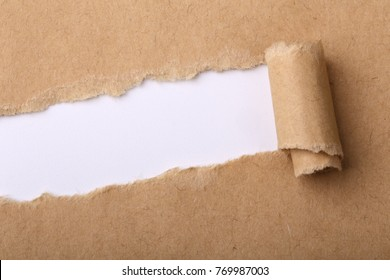 Paper tear background with blank copy space.