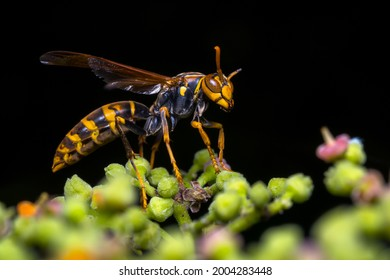 A paper wasp in exquisite detail