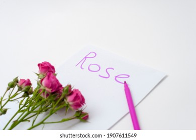 """Paper with the word """"ROSE"""", pink flowers, pink felt-tip pen.Concept of pink, rose, love, color, writing, young, wedding, Valentine's day."""