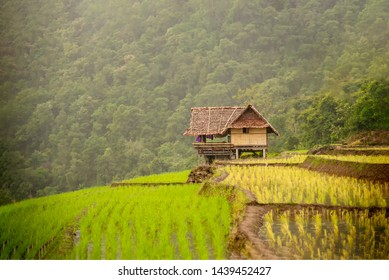 Pa-pong-peang rice terrace north off Thailand