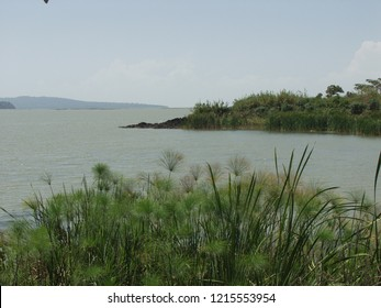 Papyrus and reed at Tana lake, Amara region of Ethiopia and source of the blue  Nile