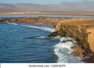 """Paracas National Reserve. The very first Marine Conservation center in Peru, refer to the prolific wildlife and the great scenery as the """"Galapagos of Peru"""""""