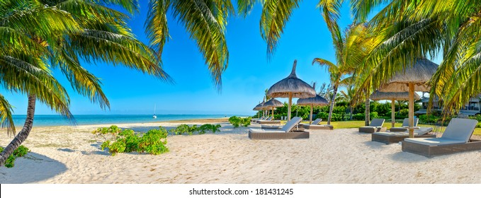 Paradise beach in caribbean tropical with palms and parasol