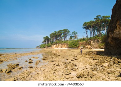 Paradise beach on Neil island, Andaman and Nikobar islands during low tide, India