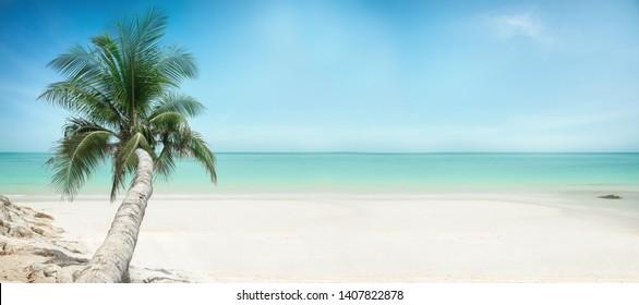 paradise beach with palm tree