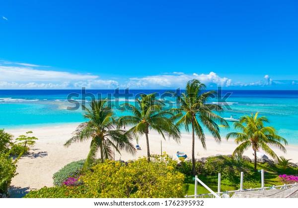 paradise-beach-sunny-palm-turquoise-600w