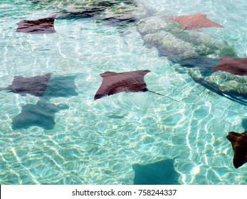 At Paradise Island, Nassau, Bahamas.