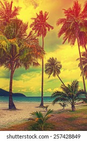 Paradise nature, palm tree on the tropical beach. Summer travel background with retro vintage instagram filter.