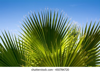 Paradise palm leaves