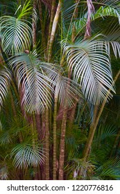 Paradise palm tree fronds