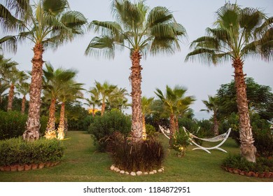 Paradise place with hammock