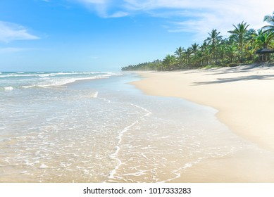 The paradise white sand beach with many of palm tree