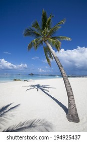paradisiacal landscape tropical beach in the Maldives
