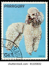 PARAGUAY - CIRCA 1983: A stamp printed in Paraguay shows the Caniche, circa 1983
