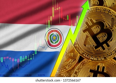 Paraguay flag and cryptocurrency growing trend with many golden bitcoins
