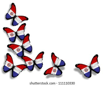 Paraguayan flag butterflies, isolated on white background