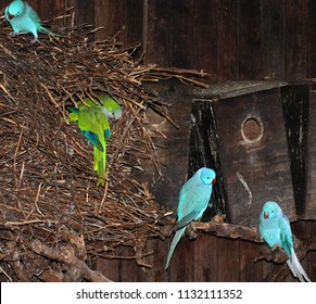 A parakeet is any one of a large number of small to medium-sized species of parrot, in multiple genera, that generally have long tail feathers.