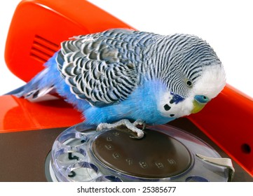 parakeet and telephones. Take the number...