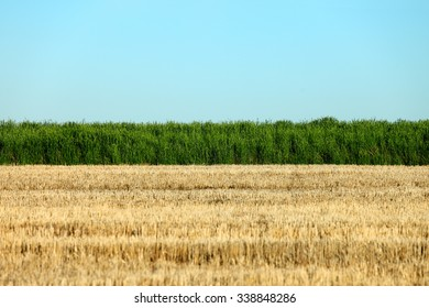 Parallel elements in a rural farm field, including the edge of a green wheat field, blue sky, and wheat stubble left uncultivated on fallow ground.