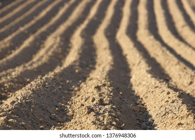 Parallel furrows of a pyramidal shape on a plowed spring field. The appearance of the soil with sown potatoes. Leaving away perspective with a gradual blur. Agriculture and growing solanaceous.