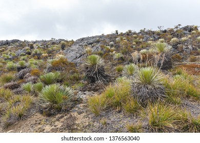 Paramo ecosystem (high treeless plateaus in tropical South America) and its vegetation, on a mountain in the venezuelan Andes.
