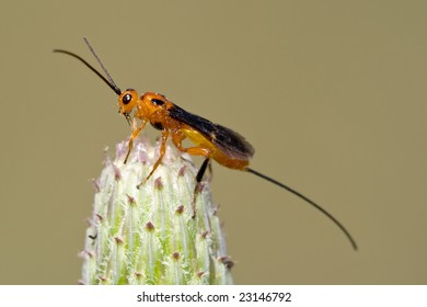 Parasitoid wasp isolated on a plant.