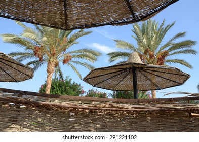 Parasols and palm trees on the beach of Marsa Alam, Egypt