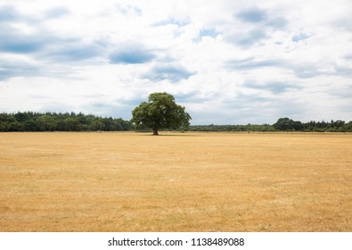 Parched, dry, yellow grass in a field near Beaulieu in the New Forest caused by an extended heatwave in the United Kingdom