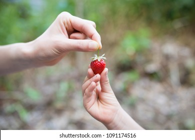 Parent and child hand over strawberriey