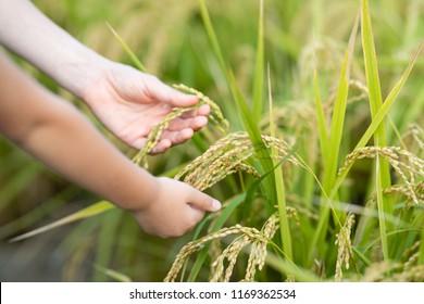 Parent and child hand touching rice