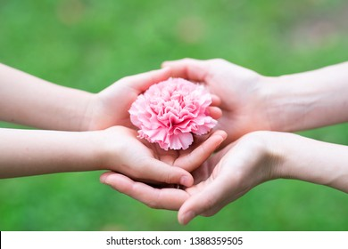 Parent and child hands handing pink carnation