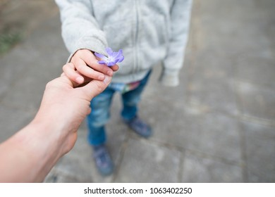 Parent and child hands that hand violet flower
