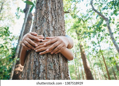 Parent and child's hands cover the old tree in the tropical forest, save the forest for the future