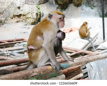 Parent-child Monkey in Batu cave in Malaysia