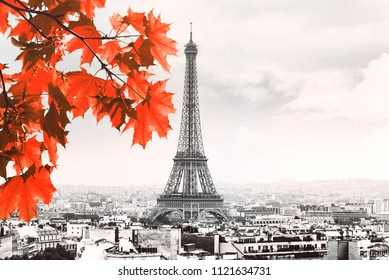 Paris black and white Picture with Eiffel Tower and Red Maple Tree