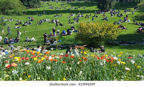 Paris, France. 01.05.2016. The Buttes Chaumont park or garden in Paris, full of people on the grass in the background. Yellow and white flowers in the foreground.