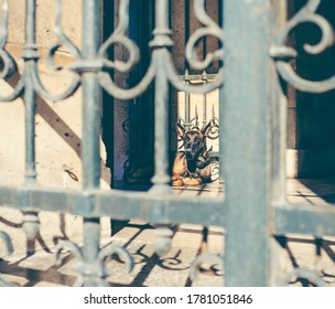 Paris, France, 17 May 2020: An angry guard dog on a chain guards the territory in the city. Private territory.