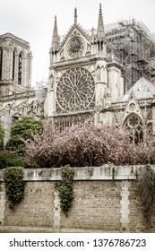 Paris, France - April 16th, 2019: the Cathedral Notre Dame de Paris after the tragic fire. The building's spire and most of its roof had been destroyed and its upper walls had been severely damaged