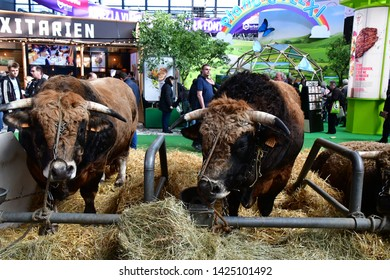 Paris; France - february 24 2019 : cow in the Paris International agricultural show, the largest and important one in Europe