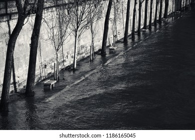 Paris, France. Flooded embankment in evening golden sunlight rays. Ducks swimming on the promenade. High water on Seine river in winter. Seasonal landscape. Black and white photo.