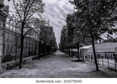 Paris, France-September 25, 2017 ; The black and white trees inside the park at Paris, France.