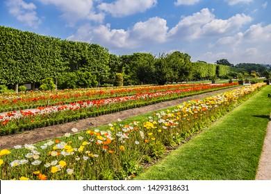 Paris Garden of the Plants (Jardin des plantes or jardin des plantes de Paris, 1889) - main public botanical garden in France. Flowers in the garden. Paris, France.