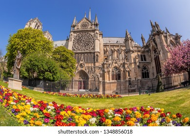 Paris, Notre Dame cathedral with spring flowers in France