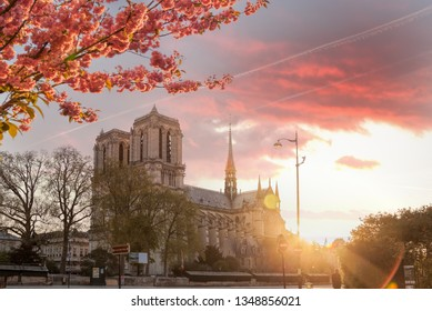 Paris, Notre Dame cathedral with spring trees in France