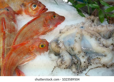 Paris,France-January 27 2018: Seafood displayed on a fishmongers counter in Paris