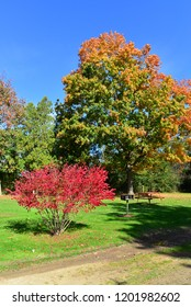A park area with a bright red bush in the foreground with beautiful autumn colors.