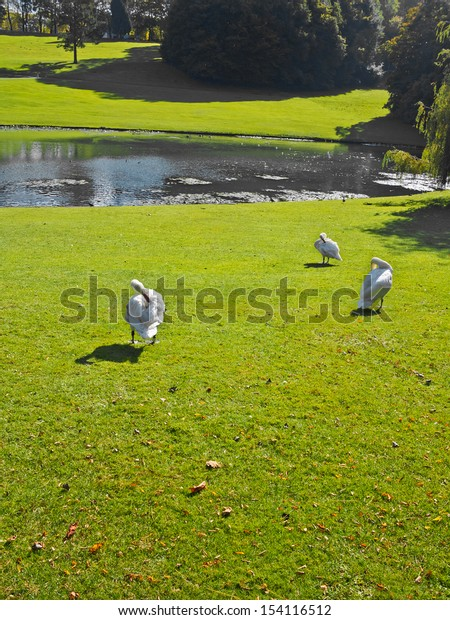 Park in Autumn. The bright colors of autumn in the park by the lake. Geese in the park.